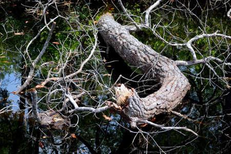 swamp: Swamp Log