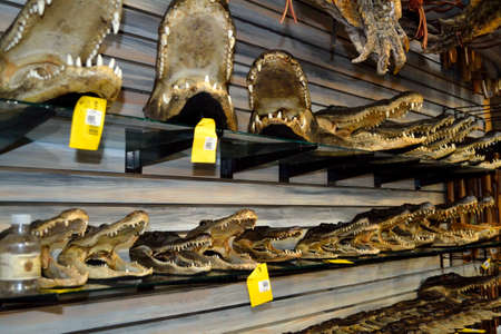 shop for animals: Alligator Heads for Sale! Stock Photo