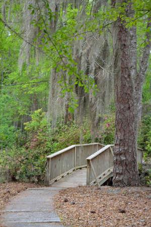 bridge nature: Walking Bridge - Nature Trail - 1 Stock Photo