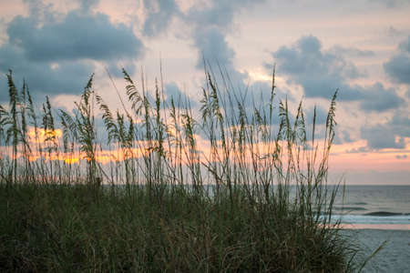 Sea Oats on beach at sunrise Stock Photo