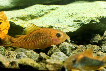 aquarium fish Stock Photo - 5819845