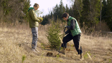 Young attractive woman holding a small fir tree, a man digging a soil near the forest. Family activists planting trees in spring. Earth Day, eco friendly concept Stock Photo