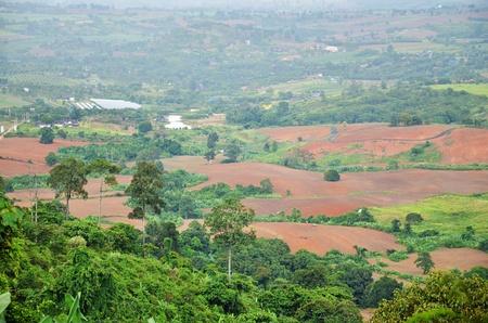 deforestacion: marrón