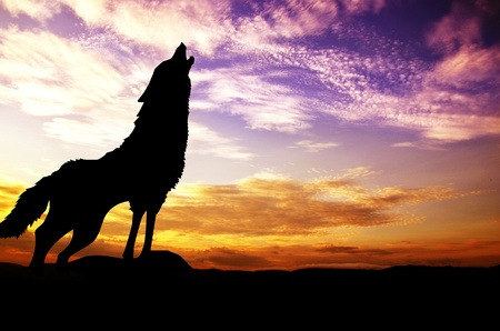 howl: background Stock Photo