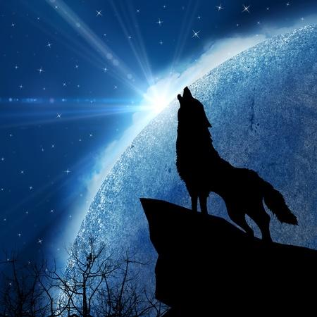 늑대: 배경 스톡 사진