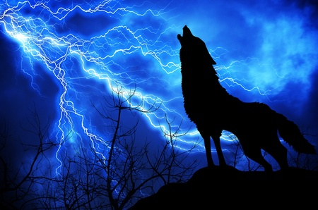 wolf: background Stock Photo