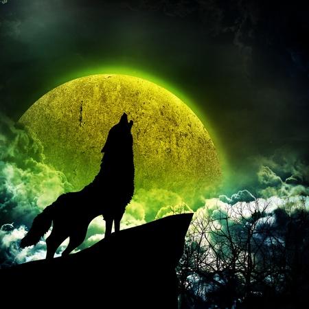 the wolf: fondo