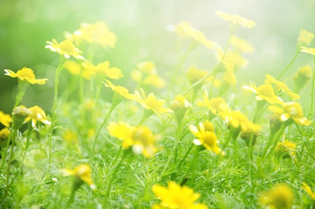 de focus: white flowers on green background