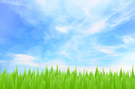 Spring or summer abstract season nature background photo