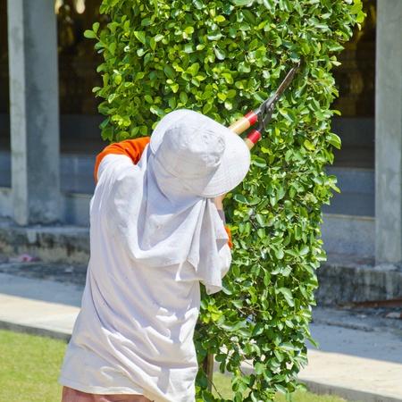 gardener cut a hedge photo