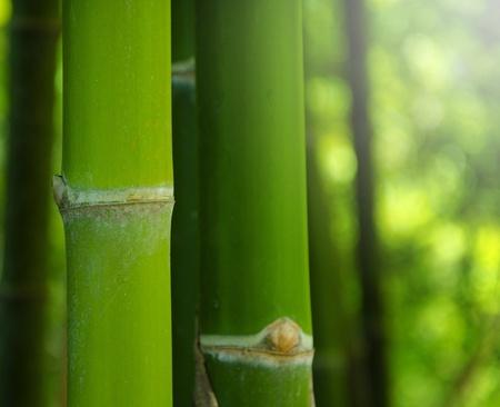 Zen bamboo Stock Photo