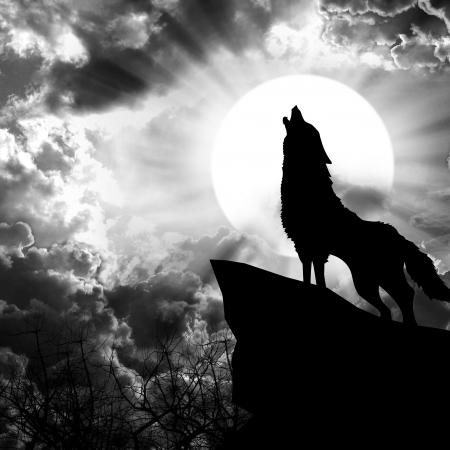 lobo feroz: lobo aullando a la silueta de la luna llena