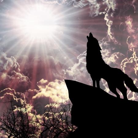 Wolf in der Silhouette heulenden zum Vollmond Standard-Bild - 19345068