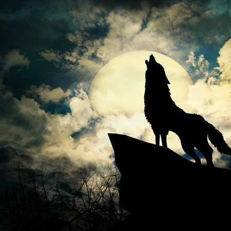 wolf in silhouette howling to the full moon photo
