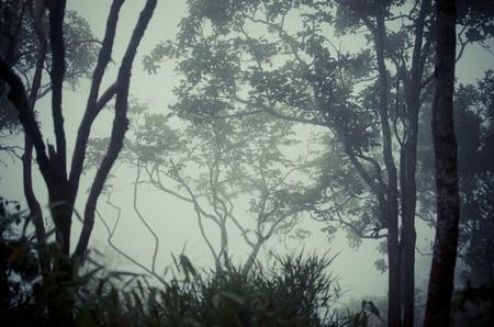 trees in dark forest photo