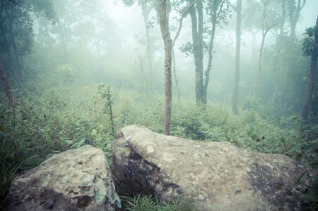 dark forest: green forest Stock Photo