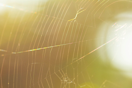 gossamer: pider web with colorful background