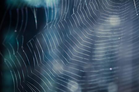 cobweb: The Spider Web closeup in a darkness Stock Photo
