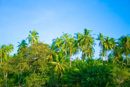 Palm trees against blue sky. photo