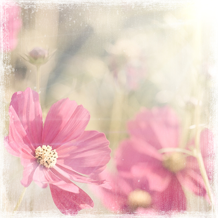 grain fields: flowers  vintage background