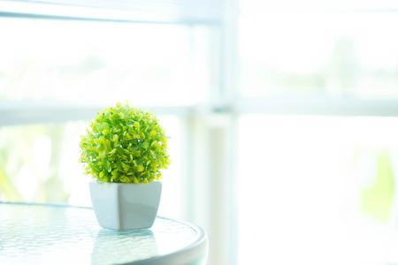 green plants: The houseplant