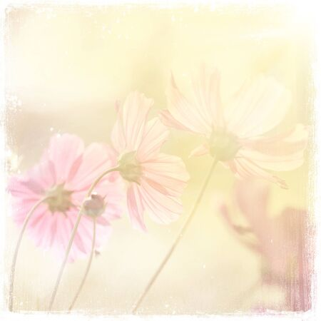 vintage background: flowers  vintage background