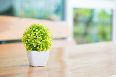 The houseplant