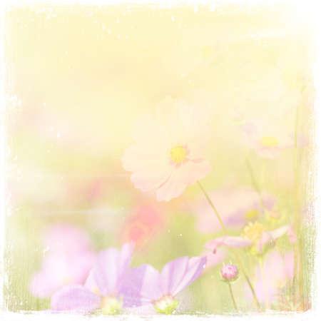 inflorescence: flowers  vintage background