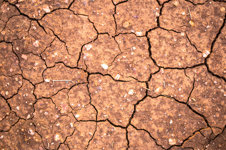 cracked earth: cracked earth texture