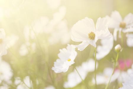 de focus: spring background