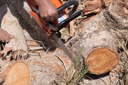 tree cutting: Man with chainsaw cutting the tree