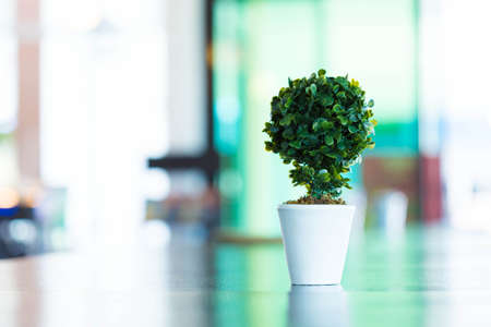 Indoor plant pot on the table