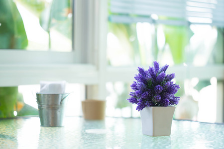 houseplant: The houseplant