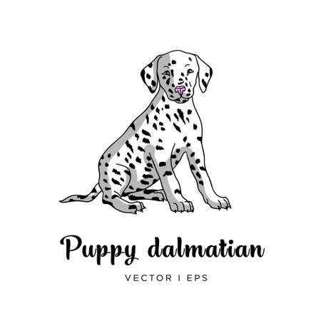 Vector editable colorful image depicting a cute dalmatian puppy dog. Isolated on a white background.