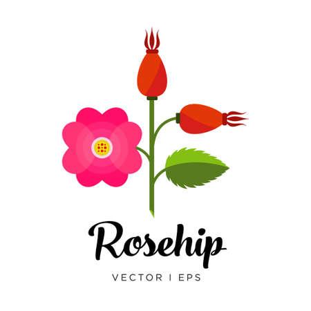 Rama de rosa mosqueta con flor rosa, cosecha de plantas de jardín, sin caderas