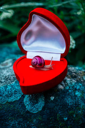 A snail in a red jewelry box, natural background. Expensive gift concept. Stock Photo