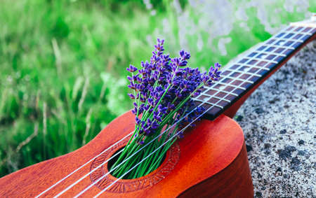 An ukulele guitar on the lavender field, close up. Music and nature concept. Stock Photo