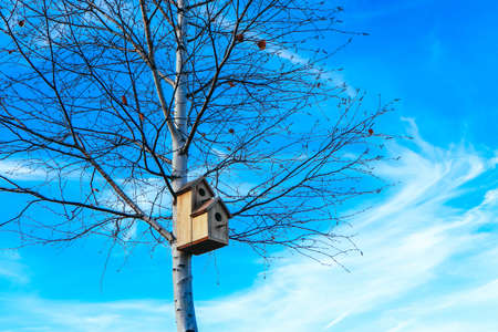 Birdhouse on birch tree, blue sky background. Nesting box on a tree in a park, spring.