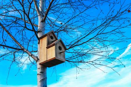 Birdhouse su betulla, cielo blu sullo sfondo. Scatola di nidificazione su un albero in un parco, primavera. Archivio Fotografico