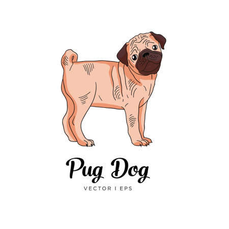 Vector editable colorful sketch of a Pug puppy dog. Isolated on a white background.