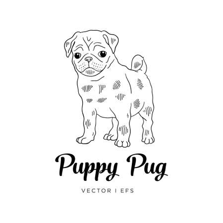 Vector editable colorful sketch of a Pug puppy dog. Black outline on a white background.