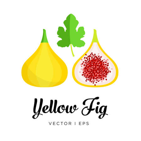 Fresh yellow fig, seeds and leaf vector editable illustration. Ripe golden fig sliced, simple flat style.