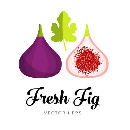 Fresh blue fig, seeds and leaf vector editable illustration. Ripe dark purple  fig sliced, simple flat style.