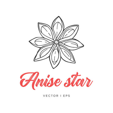 Hand drawn detailed outline illustration of the Anise star spice. 向量圖像