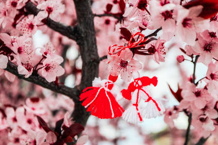Bulgarian traditional spring decor martenitsa on the cherry blossom tree background. Baba Marta holiday.
