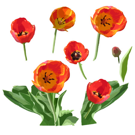 Watercolor painted print with tulips. White background. Vector Illustration