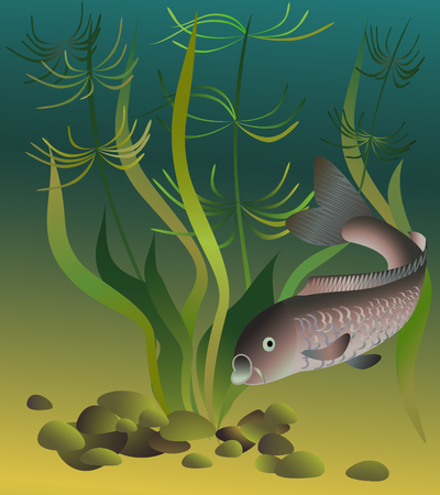 Card design with common carp. Vector print.