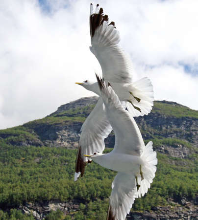 Two seagulls soaring in the sky Stock Photo - 1268492