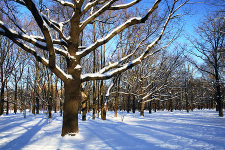 Winter theme - trees in a park covered with snow over blue sky Stock Photo - 1268496