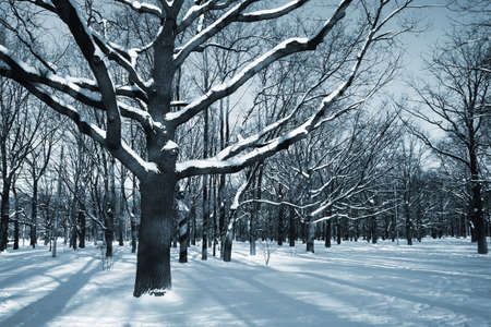 frigid: Winter theme - trees in a park covered with snow over blue sky Stock Photo